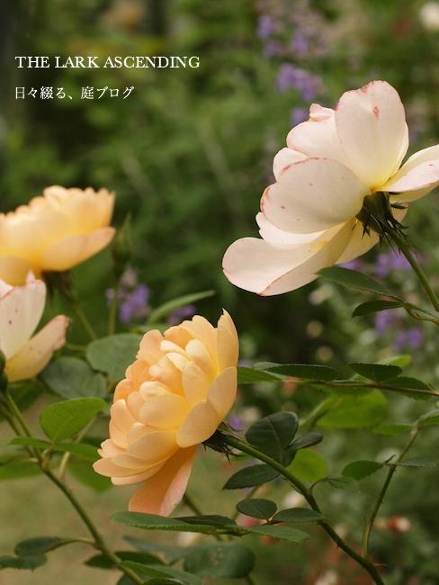 f:id:m-garden-life:20170804123518j:plain