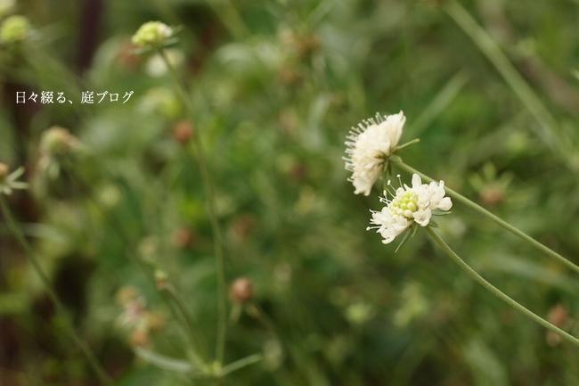 f:id:m-garden-life:20170806180720j:plain