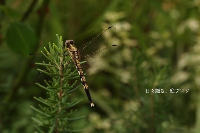 f:id:m-garden-life:20170811191418j:plain