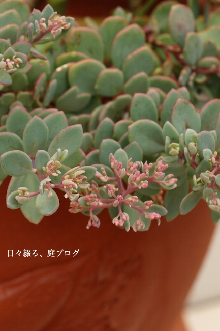 f:id:m-garden-life:20170811192706j:plain