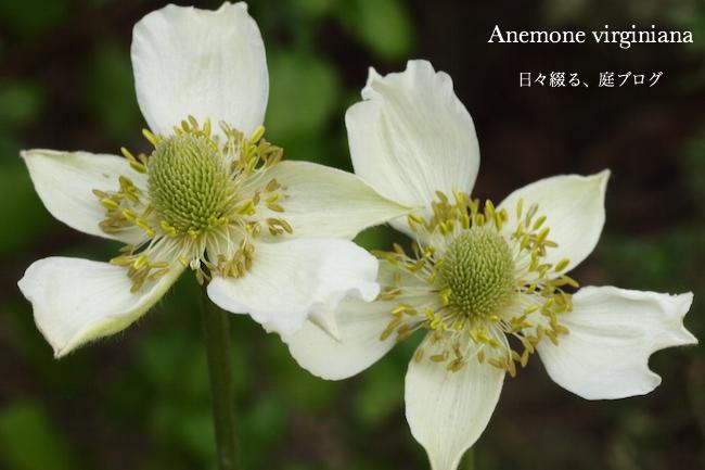 f:id:m-garden-life:20170813170815j:plain