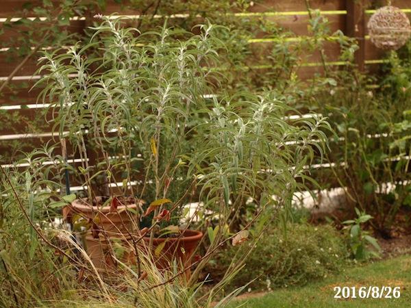 f:id:m-garden-life:20170813182327j:plain