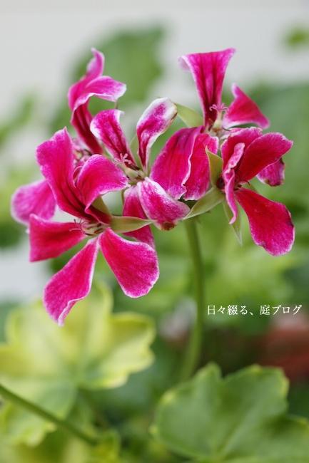 f:id:m-garden-life:20170818134359j:plain