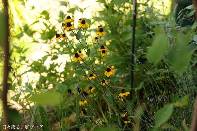f:id:m-garden-life:20170818134918j:plain