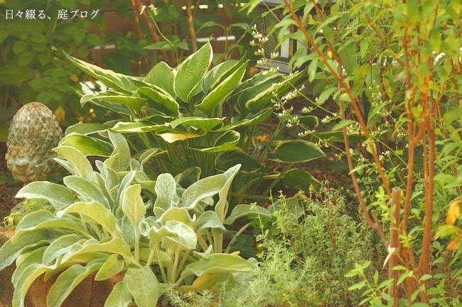 f:id:m-garden-life:20170824075218j:plain