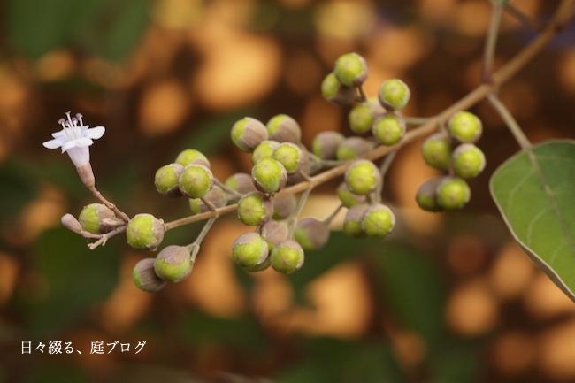 f:id:m-garden-life:20170828151618j:plain