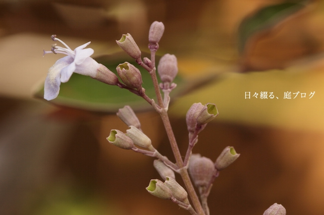 f:id:m-garden-life:20170828151811j:plain