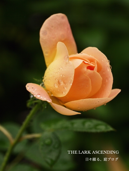 f:id:m-garden-life:20170828162639j:plain