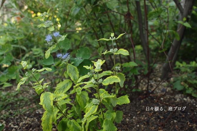 f:id:m-garden-life:20170829153555j:plain