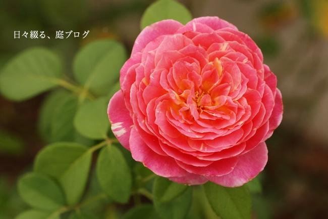 f:id:m-garden-life:20170830145604j:plain