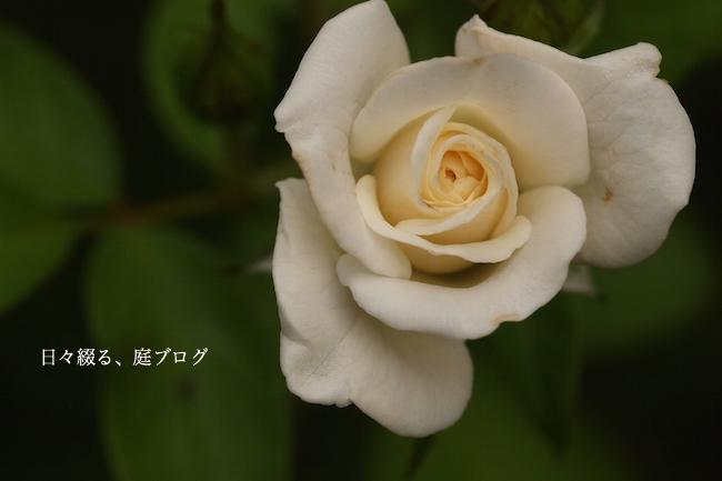 f:id:m-garden-life:20170830145845j:plain