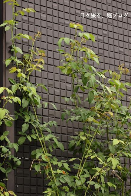 f:id:m-garden-life:20170830152534j:plain