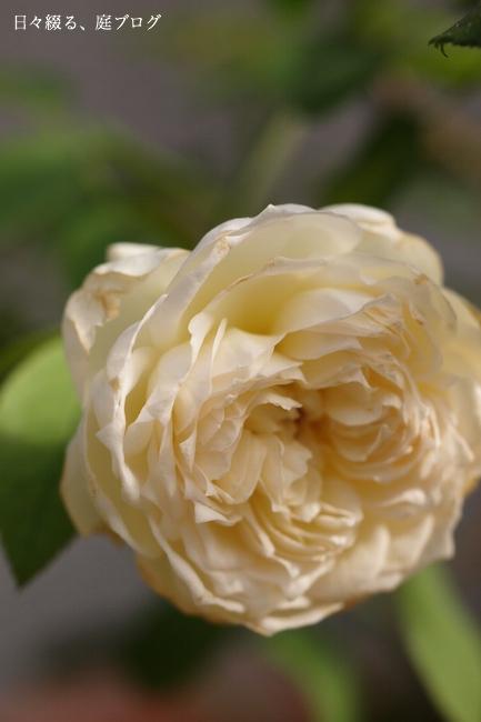f:id:m-garden-life:20170903194922j:plain