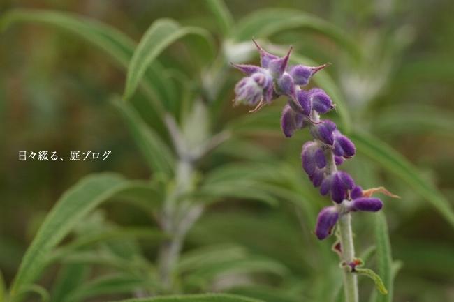 f:id:m-garden-life:20170903194952j:plain