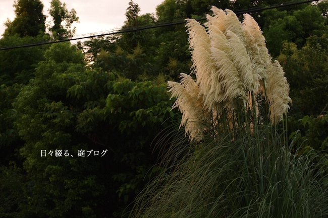 f:id:m-garden-life:20170903195558j:plain