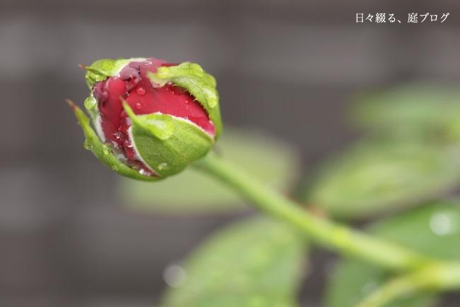 f:id:m-garden-life:20170905081421j:plain