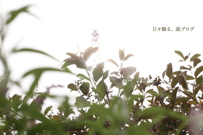 f:id:m-garden-life:20170905083651j:plain