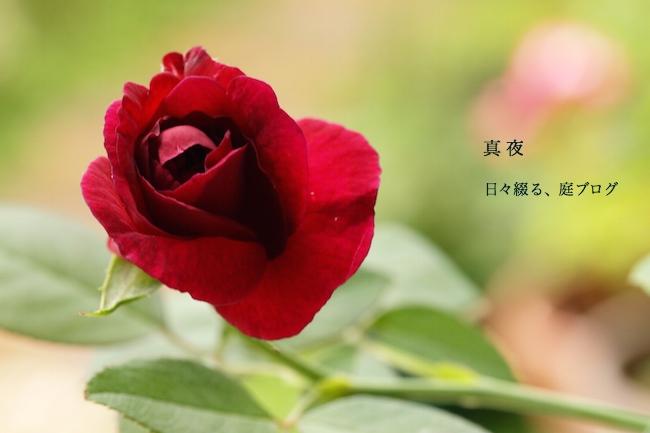 f:id:m-garden-life:20170907132535j:plain