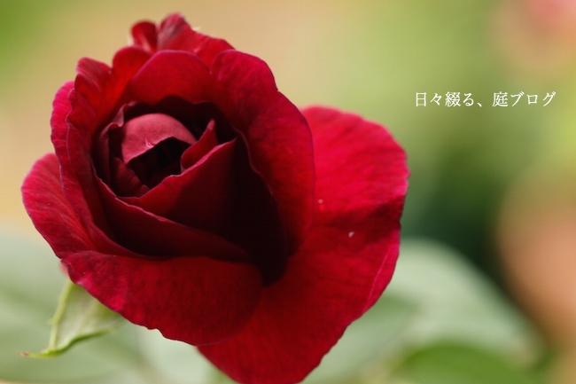 f:id:m-garden-life:20170907142815j:plain