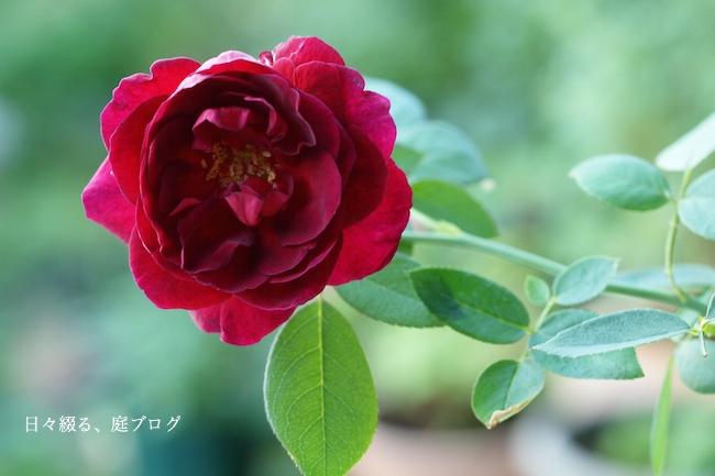 f:id:m-garden-life:20170908075354j:plain