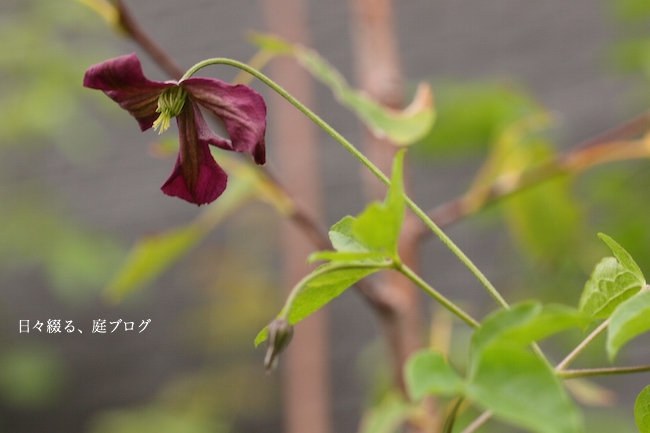 f:id:m-garden-life:20170909162731j:plain
