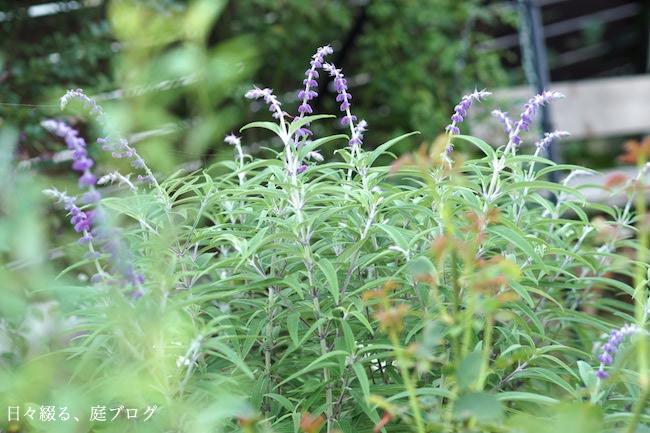 f:id:m-garden-life:20170911203748j:plain