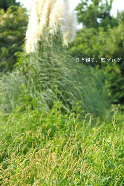 f:id:m-garden-life:20170911203835j:plain