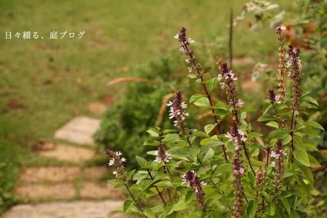 f:id:m-garden-life:20170914170421j:plain