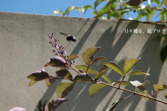 f:id:m-garden-life:20170919153945j:plain