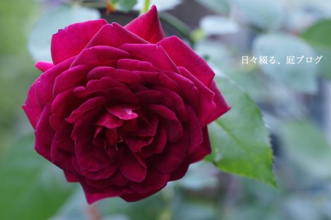 f:id:m-garden-life:20170920123331j:plain