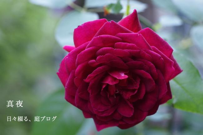 f:id:m-garden-life:20170920124100j:plain