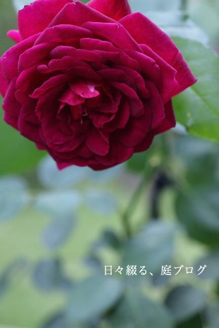 f:id:m-garden-life:20170920145735j:plain