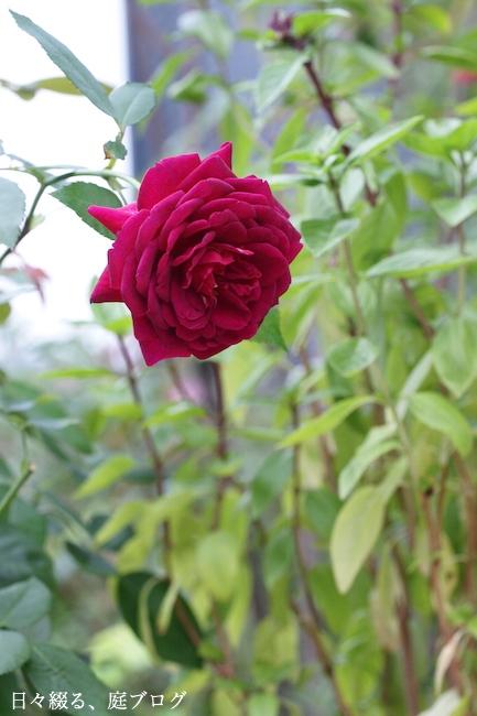 f:id:m-garden-life:20170920150147j:plain