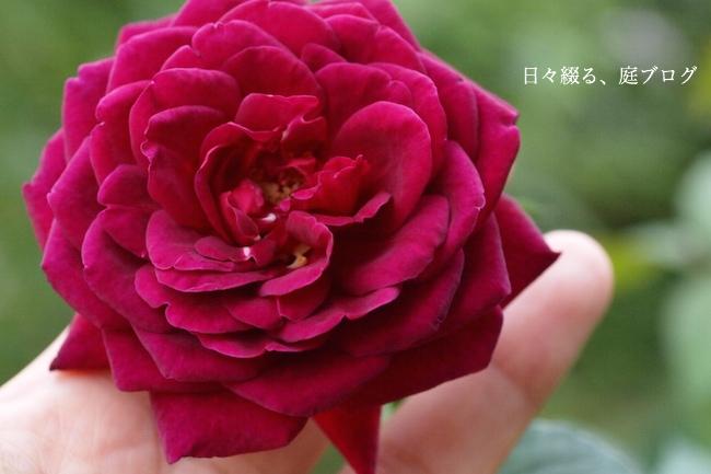 f:id:m-garden-life:20170920150420j:plain