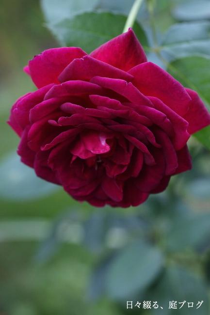 f:id:m-garden-life:20170920151031j:plain