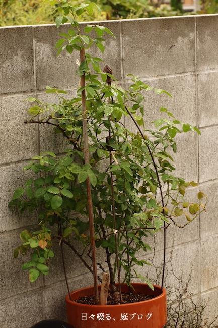 f:id:m-garden-life:20170922145226j:plain