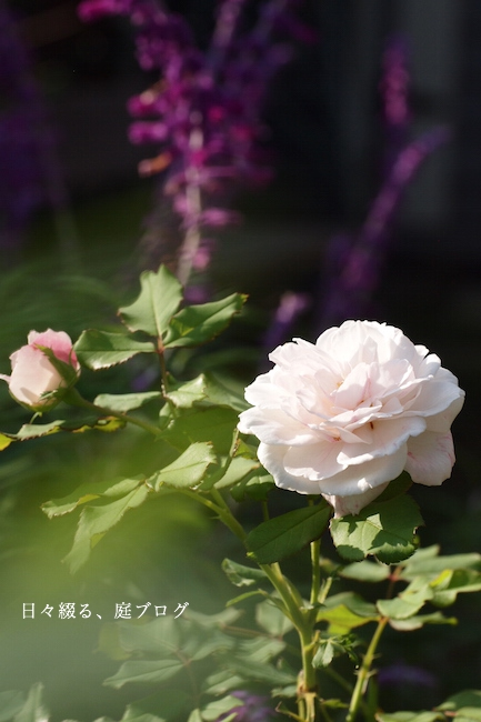 f:id:m-garden-life:20170924143844j:plain