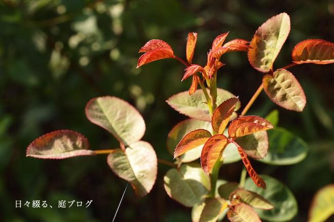 f:id:m-garden-life:20170924144554j:plain