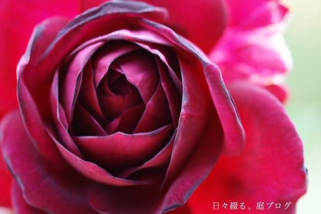 f:id:m-garden-life:20170926160549j:plain