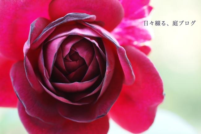 f:id:m-garden-life:20170926160716j:plain
