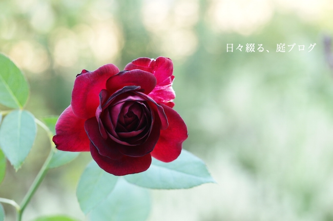 f:id:m-garden-life:20170926160826j:plain