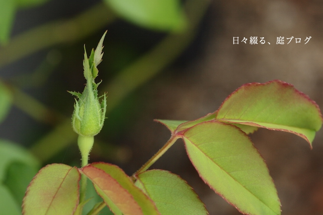 f:id:m-garden-life:20170926161050j:plain