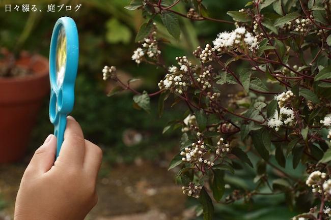f:id:m-garden-life:20170926161256j:plain