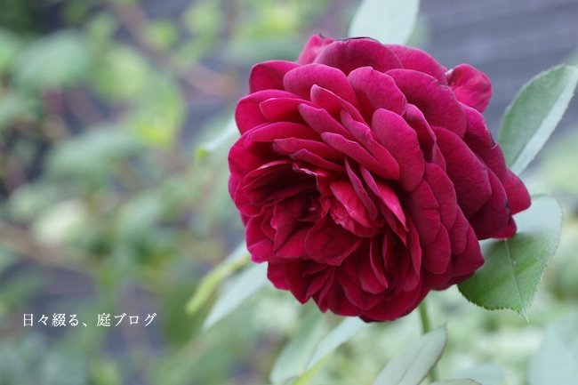f:id:m-garden-life:20170928155259j:plain