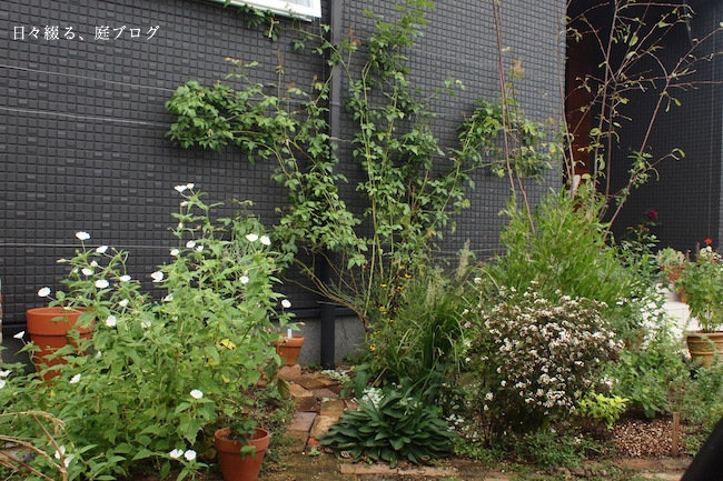 f:id:m-garden-life:20170928155427j:plain