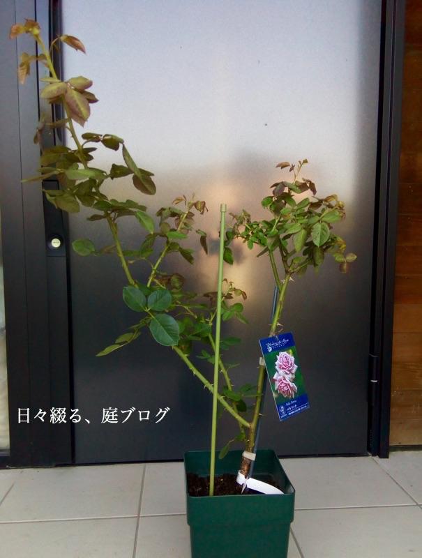 f:id:m-garden-life:20170930093953j:plain