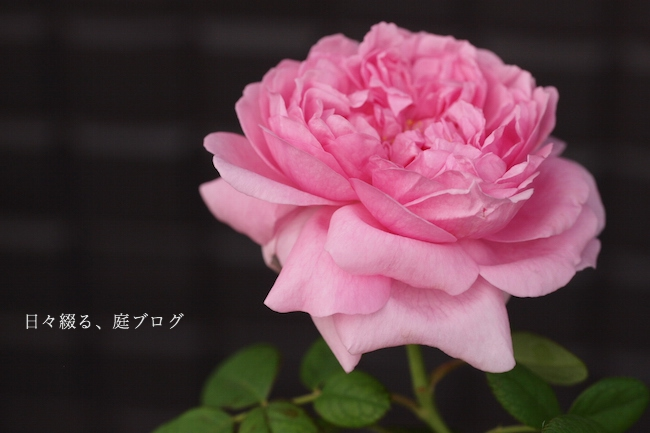f:id:m-garden-life:20170930143840j:plain