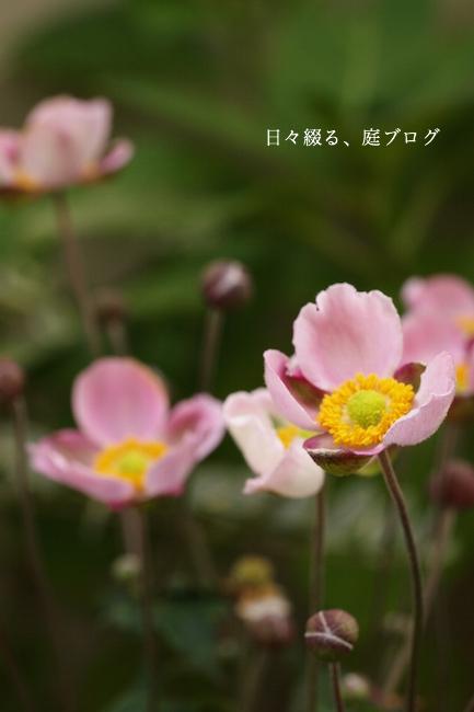 f:id:m-garden-life:20170930145029j:plain