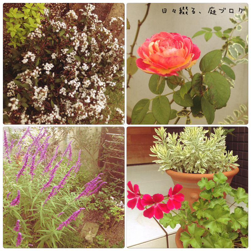 f:id:m-garden-life:20171005173901j:plain