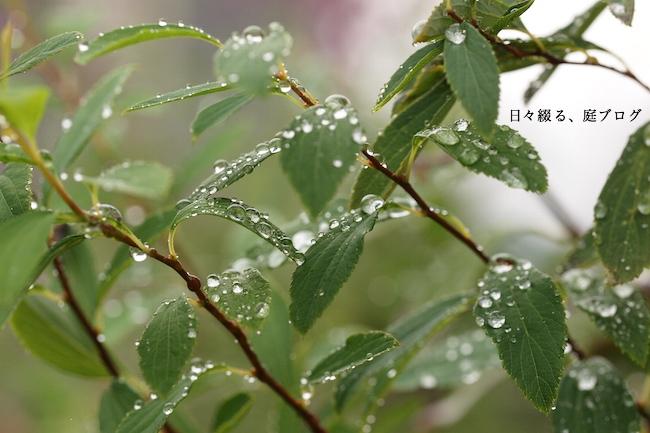 f:id:m-garden-life:20171006151641j:plain